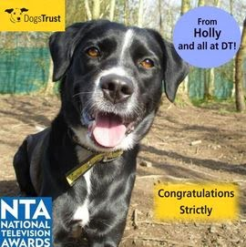 http://www.dogstrust.org.uk/rehoming/dog/1085050/holly#.UuBGAxBFDIU