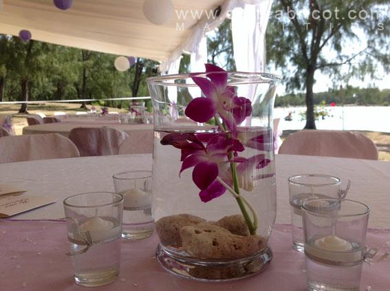 Olivia et ludovic 22 juillet 2013 carte abricot wedding for Poisson betta bocal