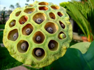Vektanova - You Probably Have Trypophobia