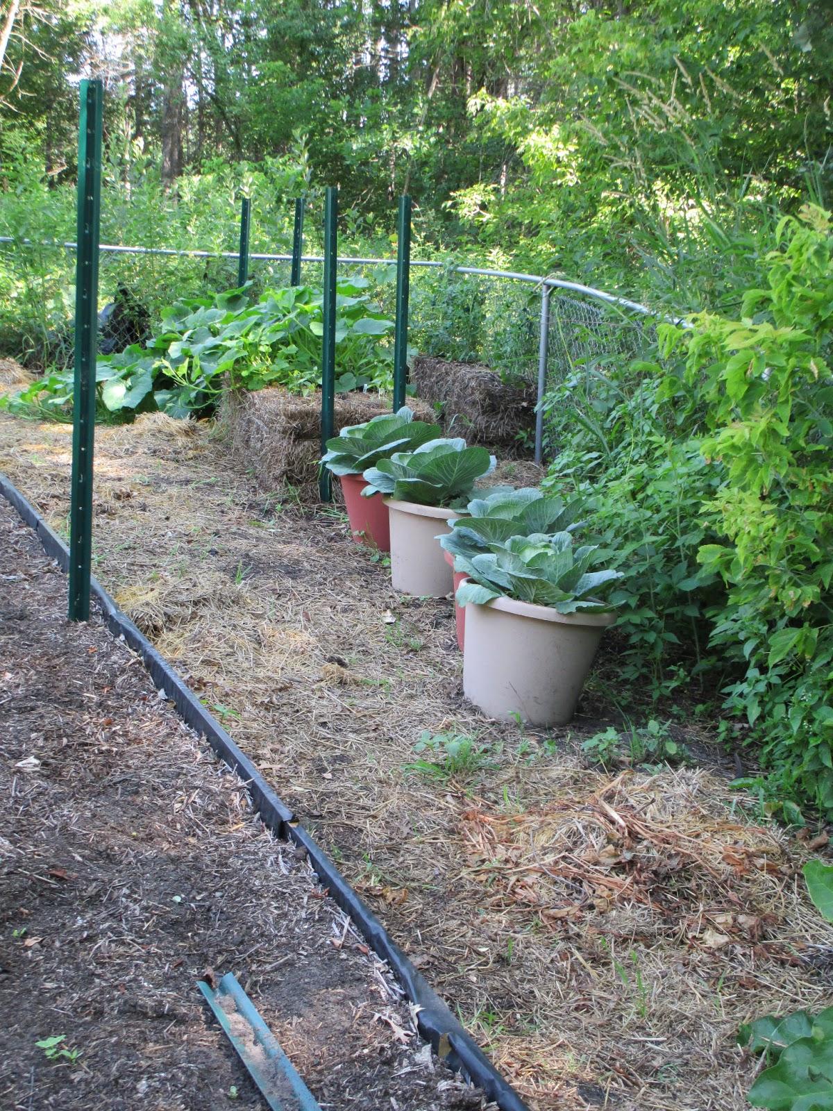 The gardener 39 s gardener evaluation of potting soil versus for Potting soil versus garden soil