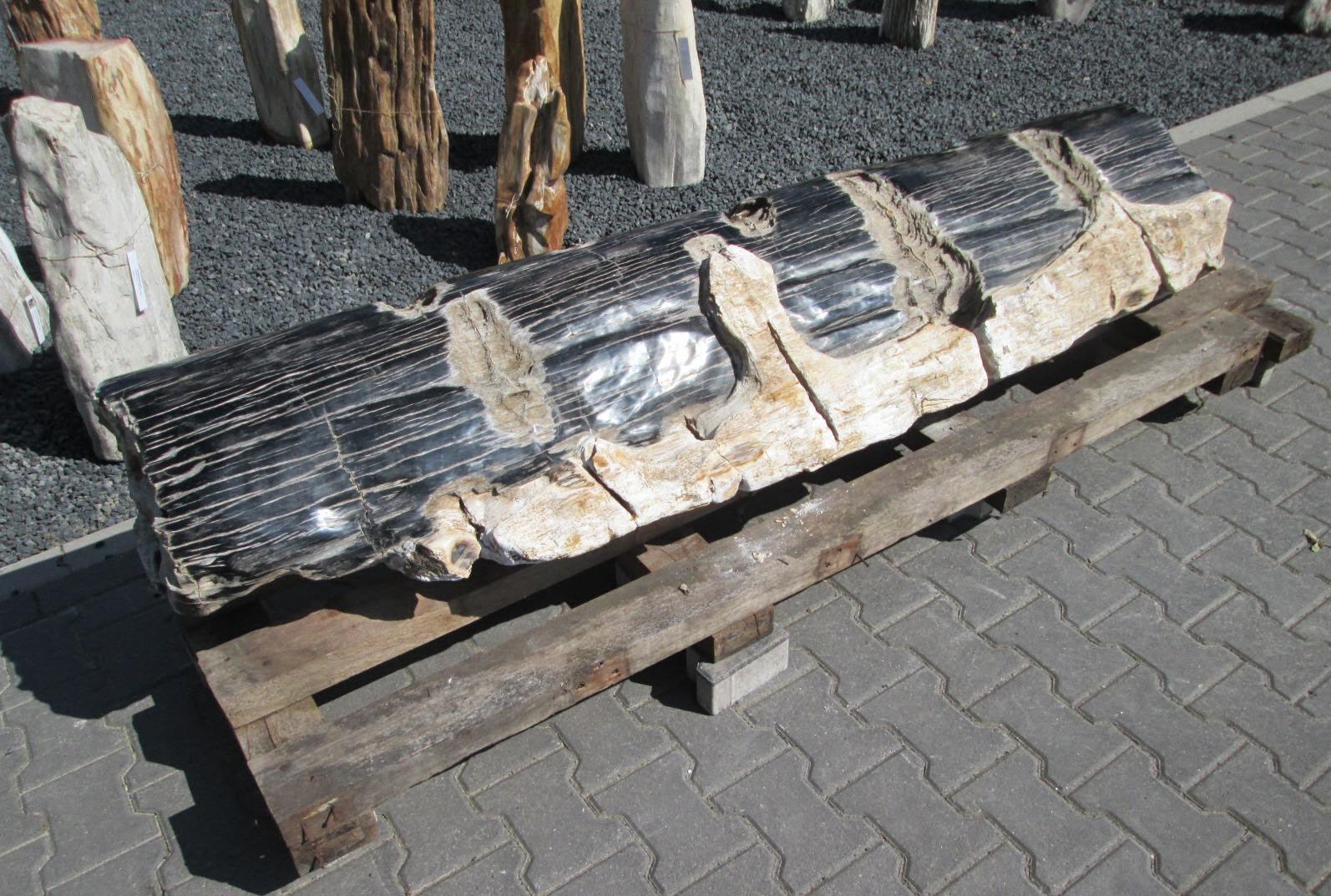 Versteend hout miljoenen jaren oud en altijd uniek - Stukken outs ...