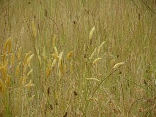 夏の枯れ草