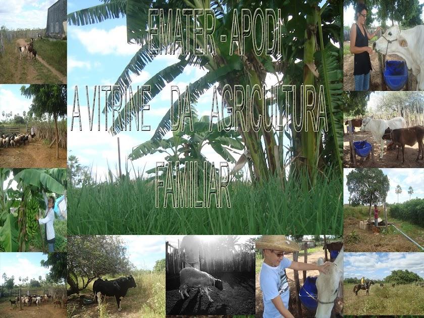 EMATER - Apodi :::: A Vitrine da Agricultura Familiar
