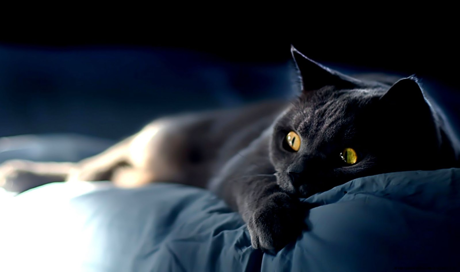 Scary Grey Cat