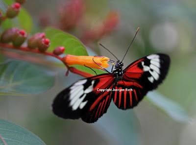 http://whereintheworldisjuergen.blogspot.com/2012/11/12-insect-macro-photography-tips.html#.U1UDFKKriuI