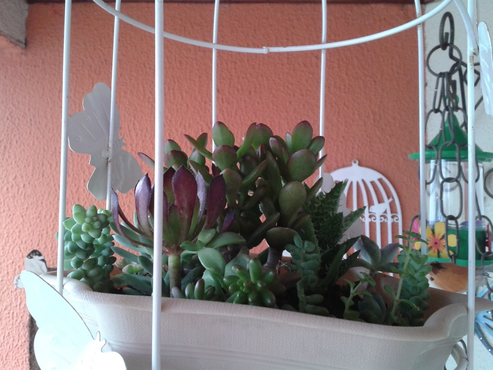precisam de pouca água e poucos cuidados São plantas lindas com