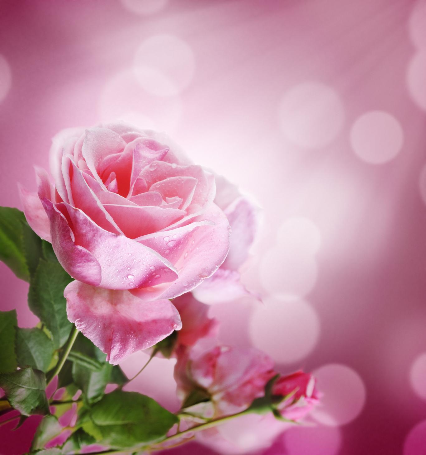 Arreglos florales con rosas de colores floral roses - Gama de colores rosas ...
