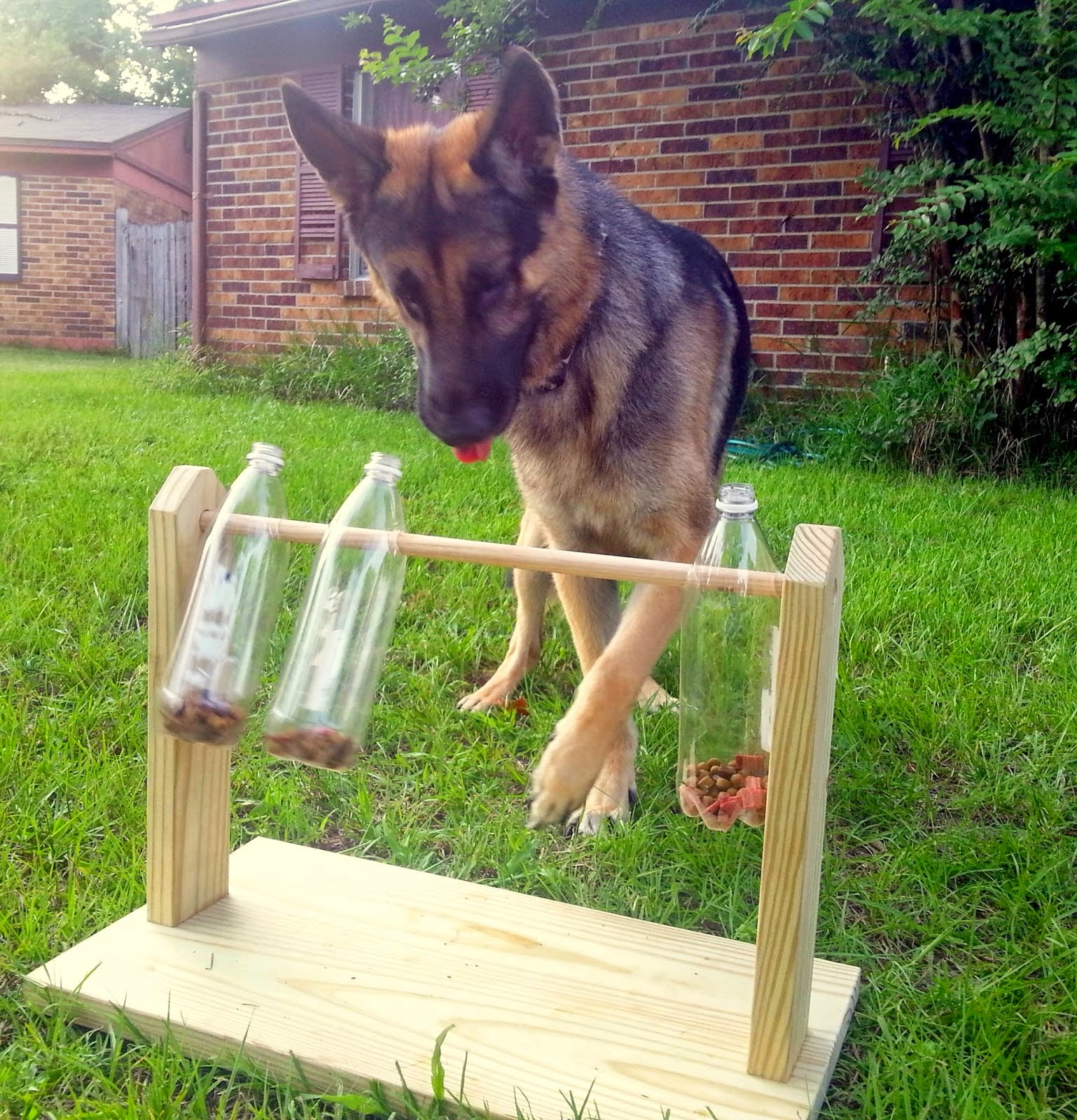 Do it yourself ideas and projects diy dog treat game solutioingenieria Choice Image
