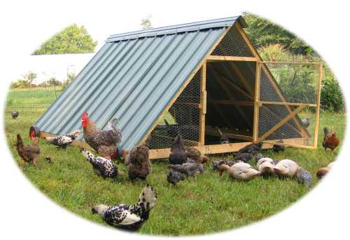 Hearts toward home our chicken order is in for Big chicken tractor
