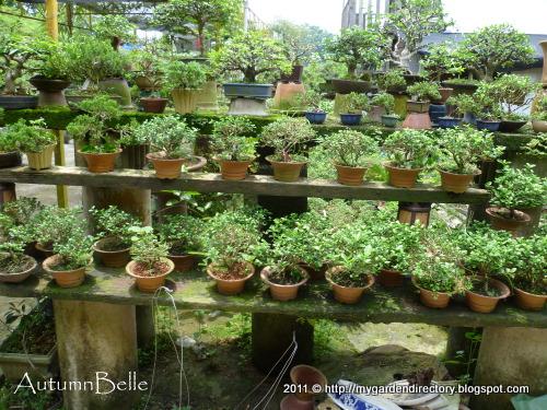 My garden directory   reviews of plant nurseries & garden supplies ...