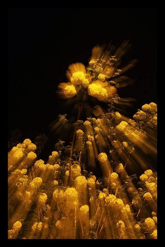 Fleur nuit2