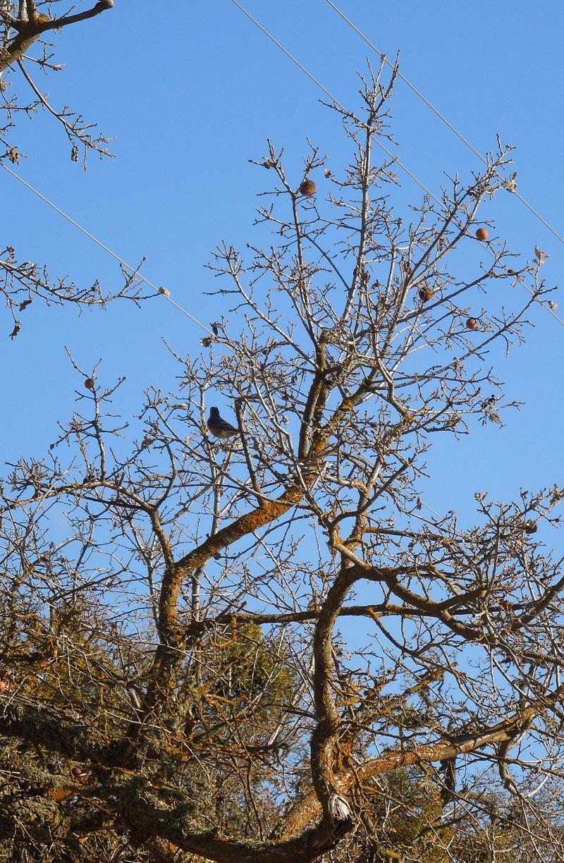 Looking at Deciduous Oak Trees in Winter