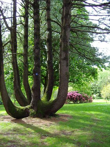 Timsaha benzeyen bir ağaç