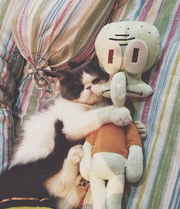Funny cats - part 86 (40 pics + 10 gifs), cat hugs squidward doll