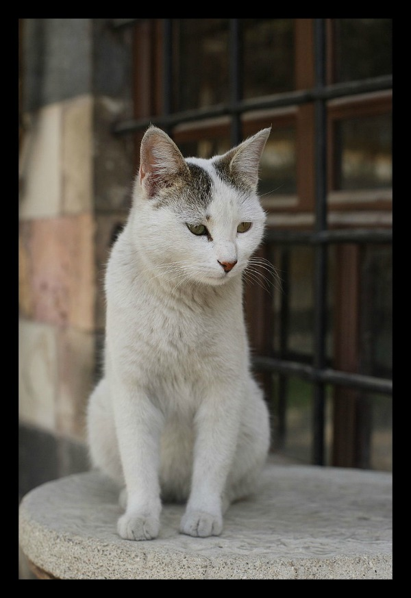al azem palace cats