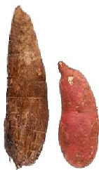 Yam or Sweetpotato?