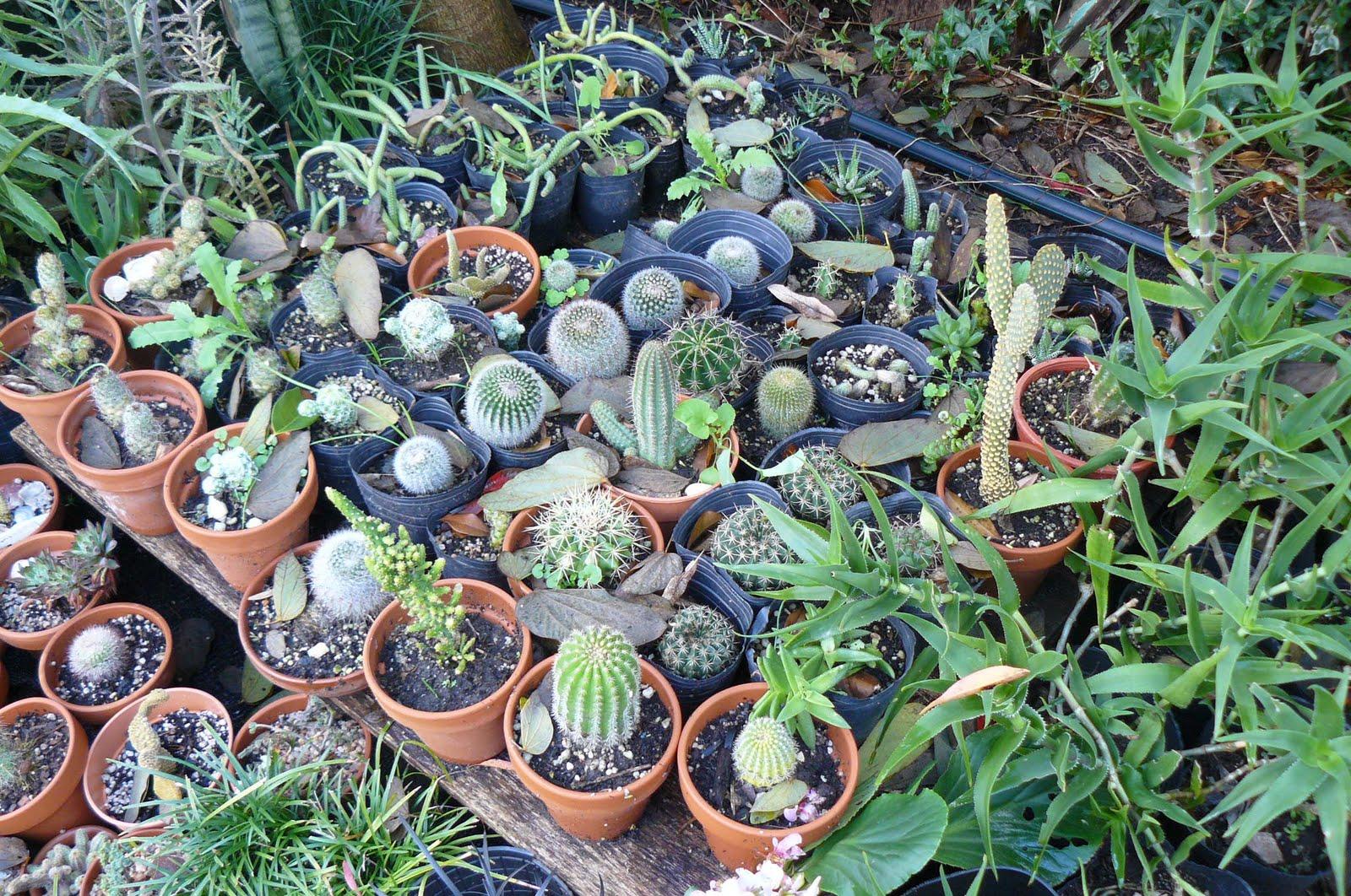 Jardines de cactus y suculentas junio 2011 for Jardines con cactus y piedras