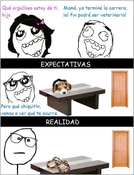 memes caricaturas  cuando eres veterinario