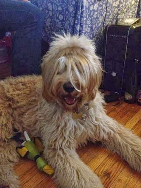 Cute dogs - part 9 (50 pics), dog sits on floor