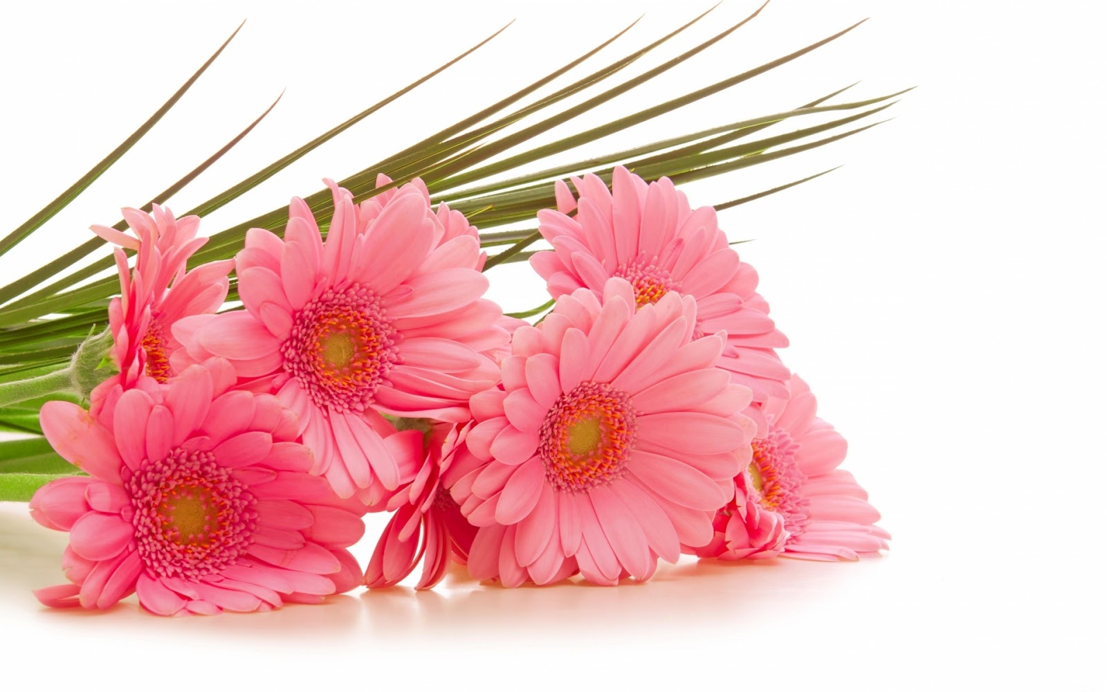 Flowers for flower lovers beautiful flowers wallpapers beautiful flowers wallpapers izmirmasajfo Image collections