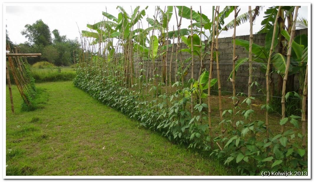 Pensionado in the philippines vegetable garden for Philippine garden plants