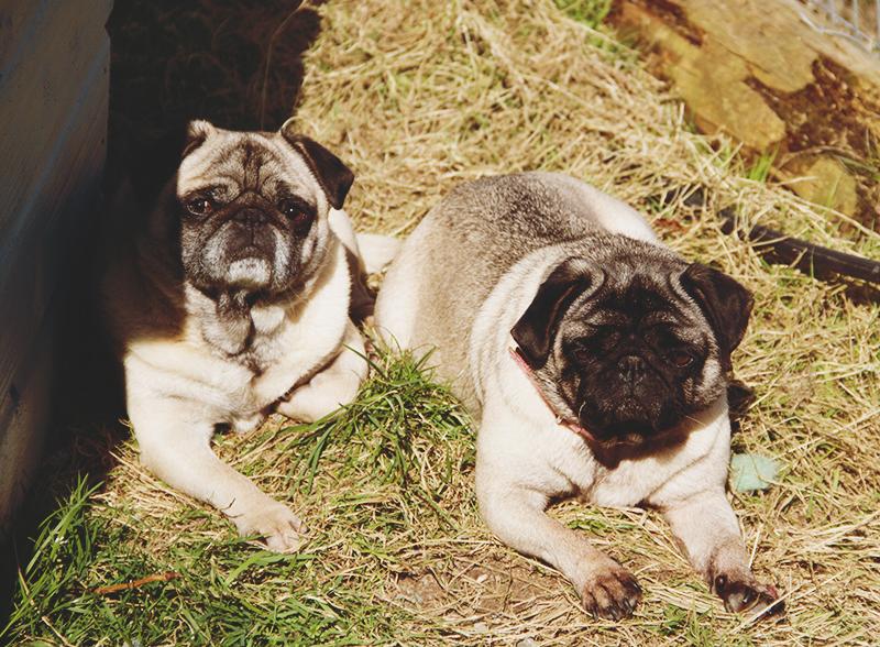 Killarney march 2015 petting farm