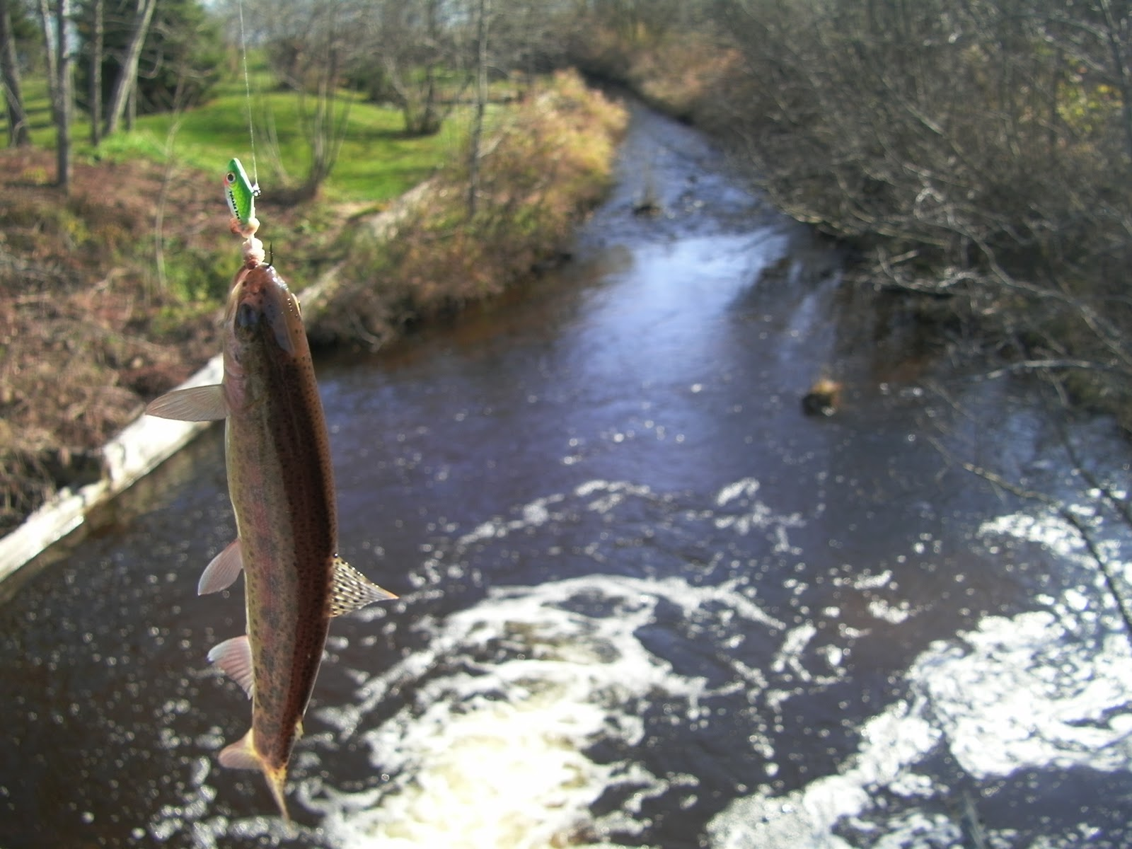 Wisconsin fishing reports algoma stream report 11 12 11 for Wi fishing report