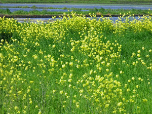 5月の田舎暮らし格安物件探しで見付けた花