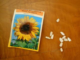 sobre de semillas de girasol
