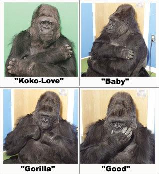 Feliz cumple Koko! 2+%281%29