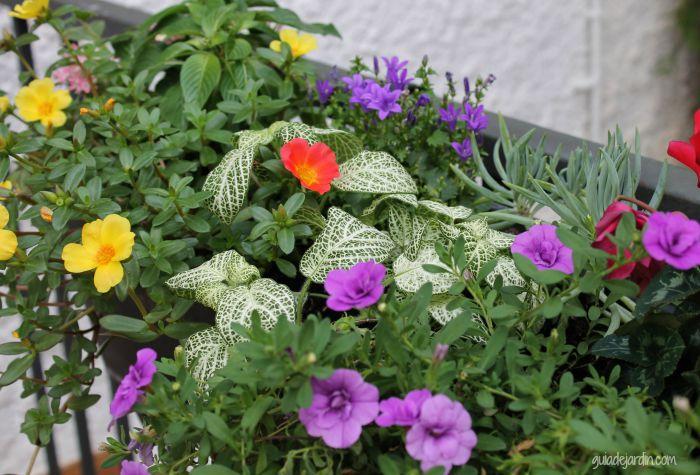 Las plantas en su nuevo lugar