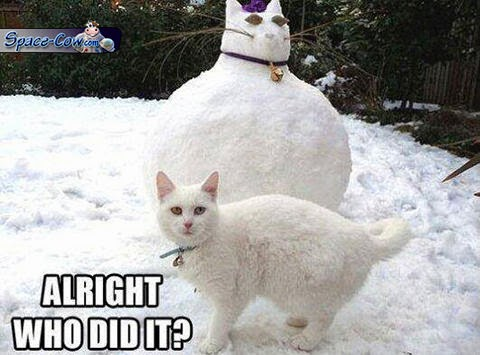 funny snow cat picture