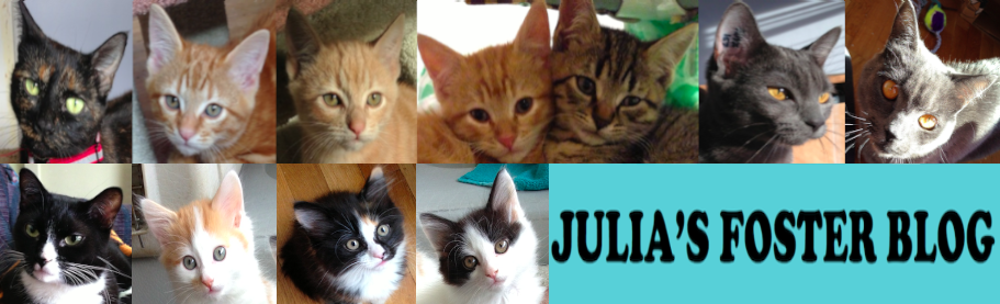 Julia's Blog: Fostering Adoptable Cats and Kittens for VOKRA