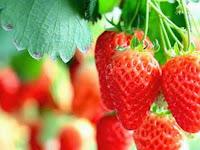 6 Manfaat  Buah Strawberry untuk Kesehatan Anda