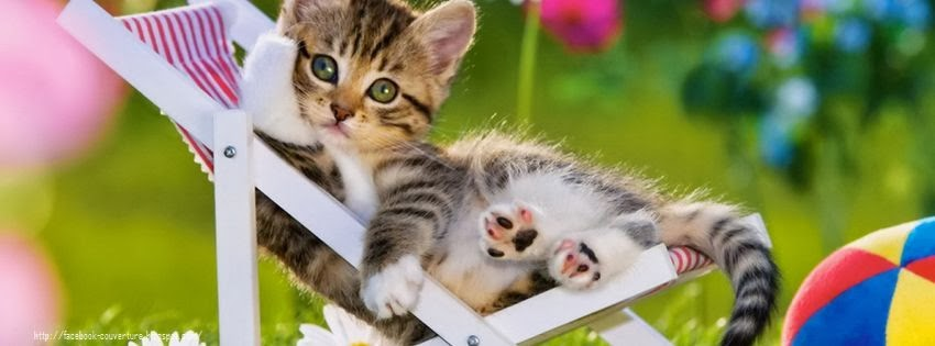 Une belle image de couverture facebook de chats