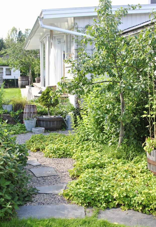 trädgård plommonträd smultron