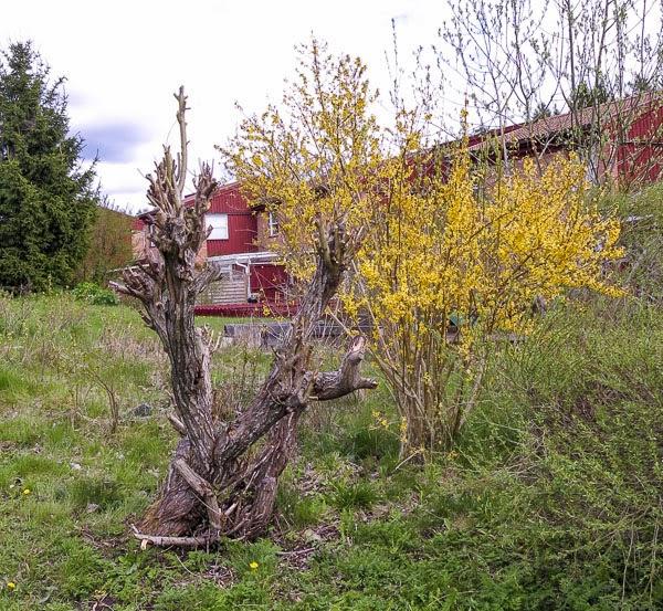 pil. pilträd, pilgrenar