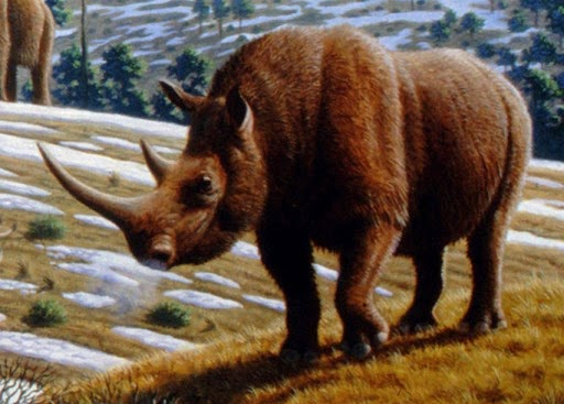 The woolly rhinoceros once roamed wild on the plains of Europe (Credit: Public Library of Science via Wikimedia Commons) Click to enlarge.