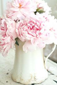 Mimos de rosas