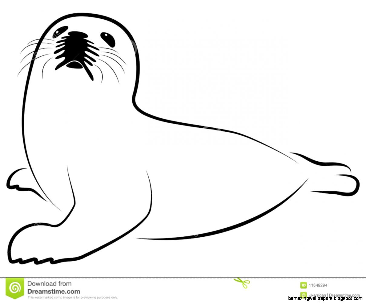 Seal Black And White Clipart   Clipart Kid