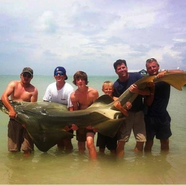 Big fishes of the world guitarfish shovelnose shark for World largest fish
