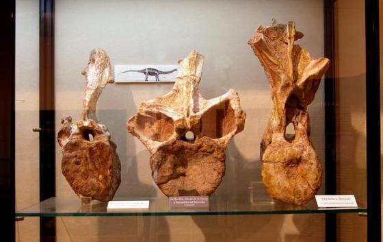 Museo Dinosaurios_Salas_Burgos_Efimerata