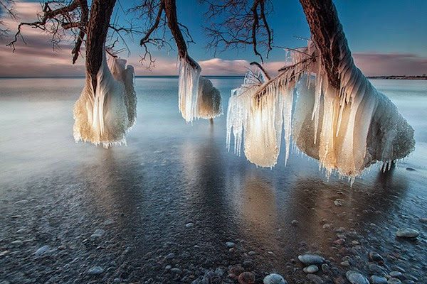 Frozen trees near Lake Michigan. - The 30 Most Amazing Photos Of Frozen Things In Honor Of The Coldest Morning Of The 21st Century