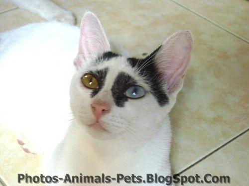 http://3.bp.blogspot.com/-FaK95ktJlqs/TxhLrdoLvkI/AAAAAAAAC8c/toA-k6aVhr4/s1600/images%252Bof%252Bcats.jpg
