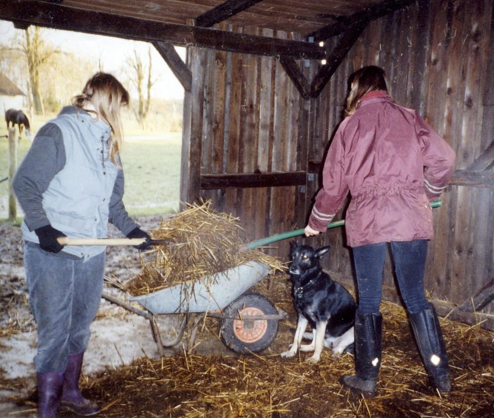 Pferde tiere gesundheit soziales zeitgeist 2012 05 13 for Leben ausmisten