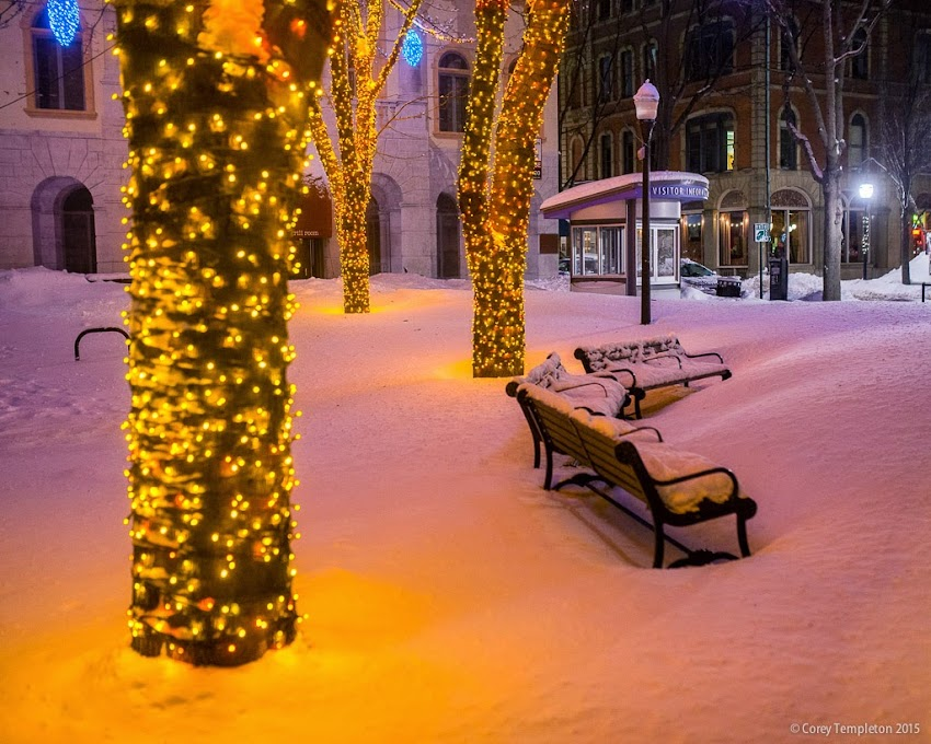 Portland, Maine USA February 2015 night at Tommy's Park with lights on trees in the old port. Photo by Corey Templeton.