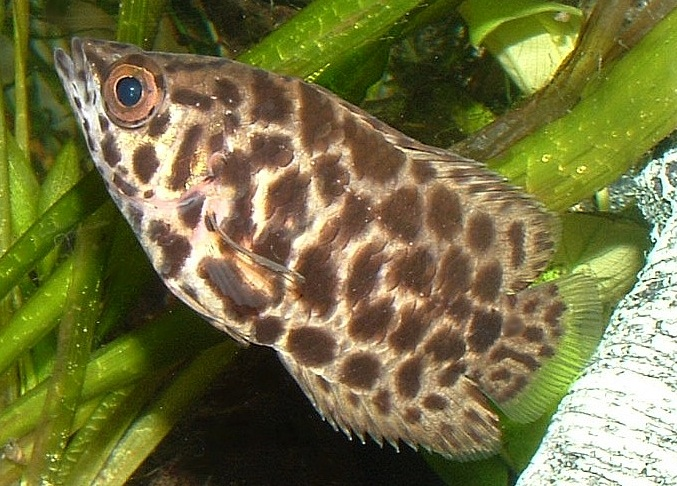 leaf fish fishes world hd images free photos