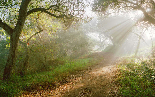 Tips Memotret Cahaya Matahari Ray Off Light atau ROL