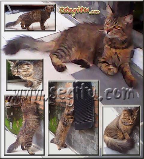 http://www.segitu.com/2014/06/kucing-persia-500-ribu.html