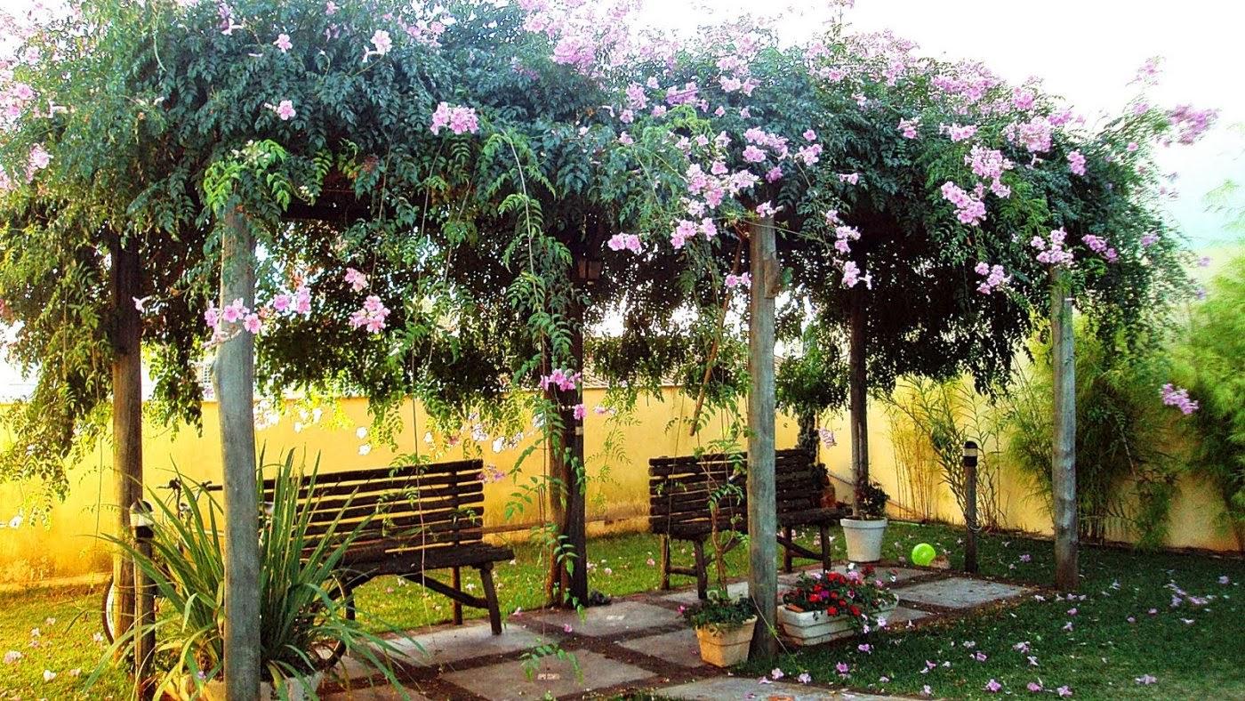 Pergolados veja modelos maravilhosos dicas decor - Plantas para pergolas ...